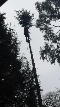 Tree cutting Billingshurst