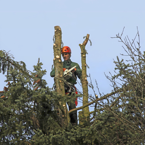 Tree Removal Sussex