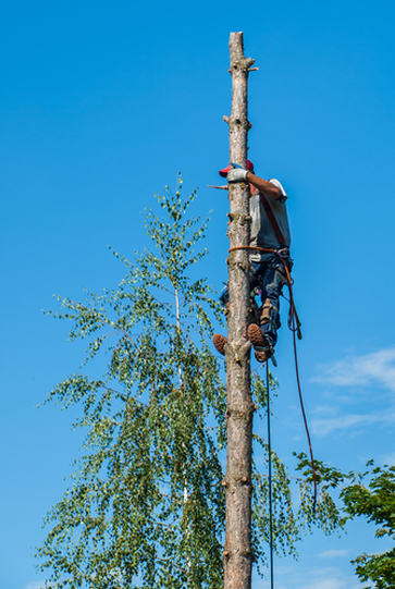 Tree Surgery Crawley