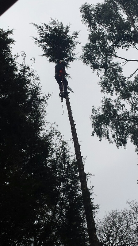 Tree clearance Horsham